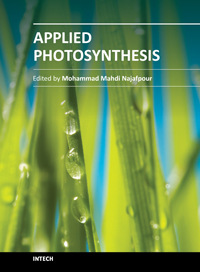 process of photosynthesis
