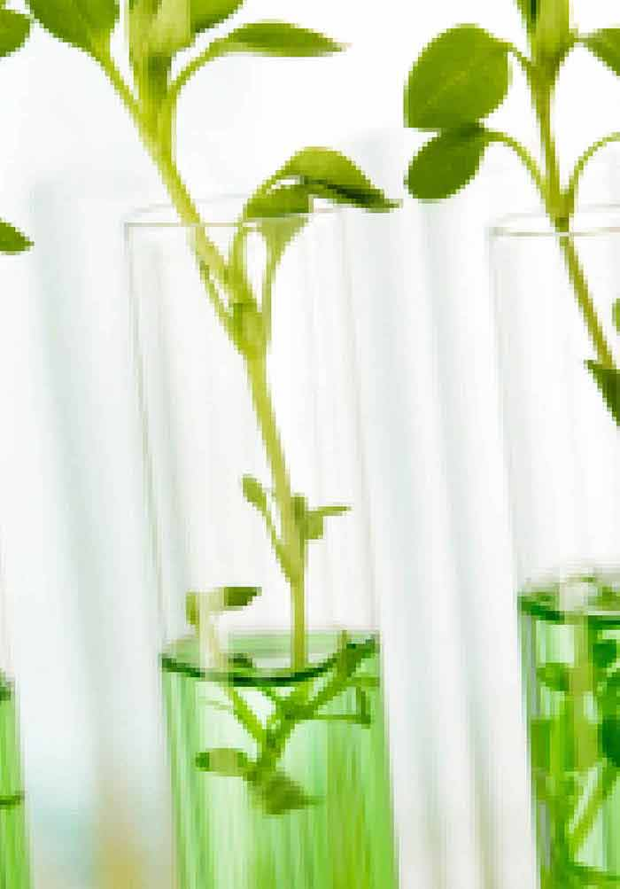 Agricultural Chemistry | IntechOpen