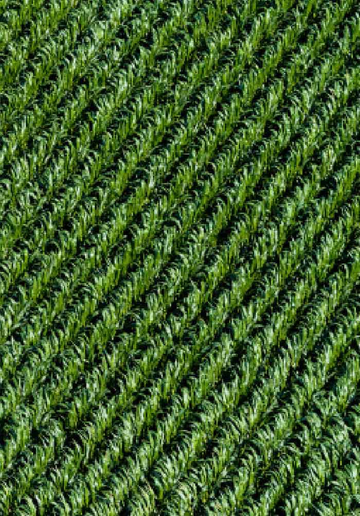 Pesticides: Environmental Impacts and Management Strategies | IntechOpen