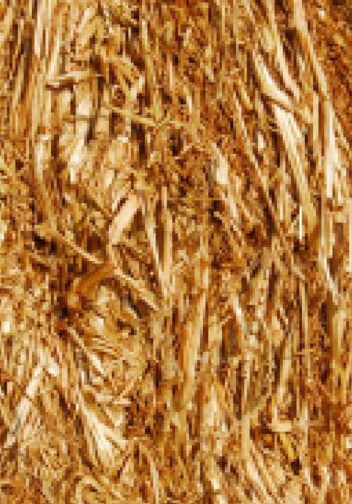 Microalgal Biorefineries | IntechOpen