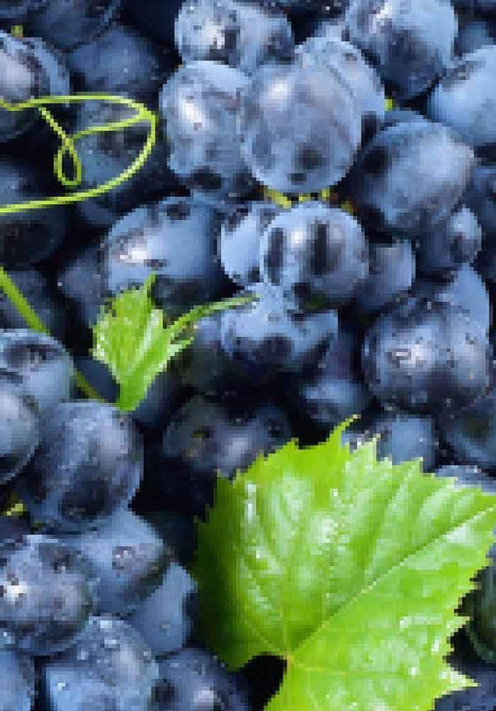 what are the different forms of grapevine explain with examples
