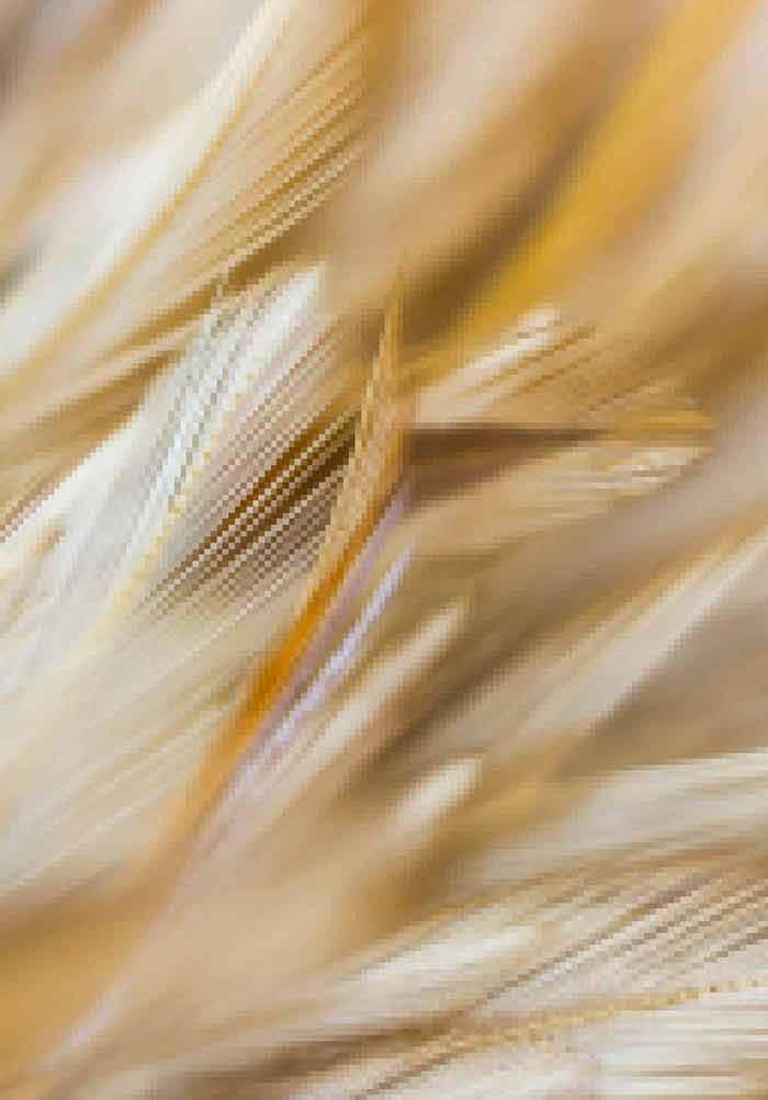 Mycotoxins in Poultry | IntechOpen