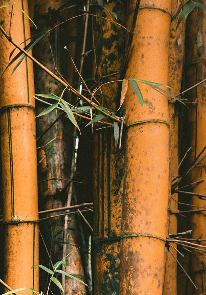 The Use of Bamboo for Erosion Control and Slope