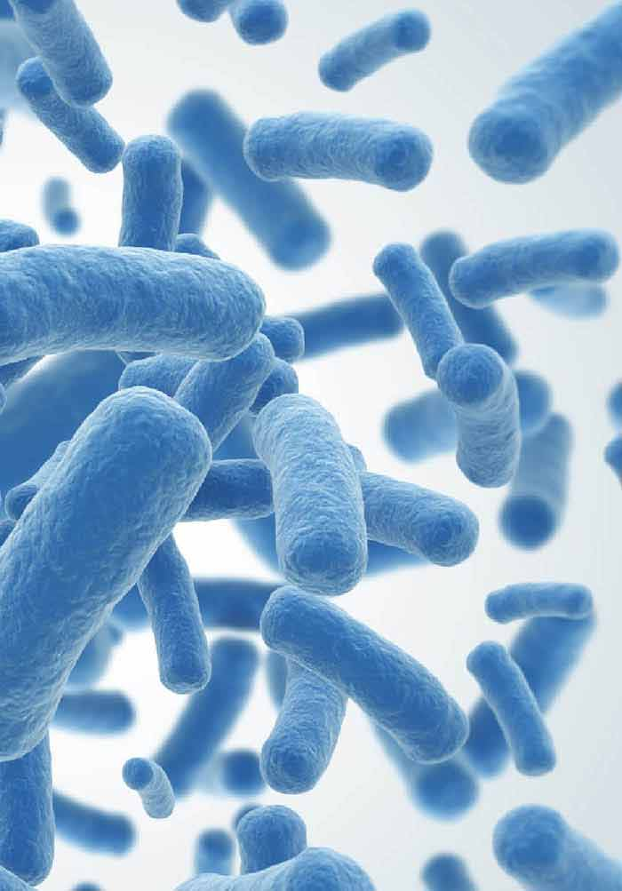 Overview of Clostridium difficile Infection: Life Cycle