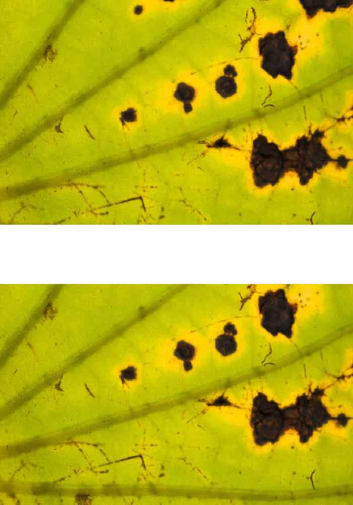 Fungicides for Plant and Animal Diseases | IntechOpen