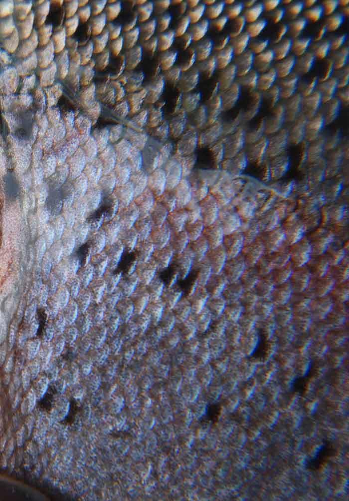 Closed Aquaculture System: Zero Water Discharge for Shrimp