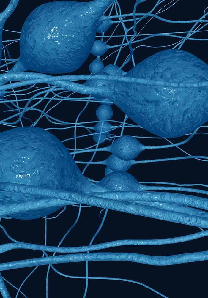 Inflammation and Autonomic Function   IntechOpen