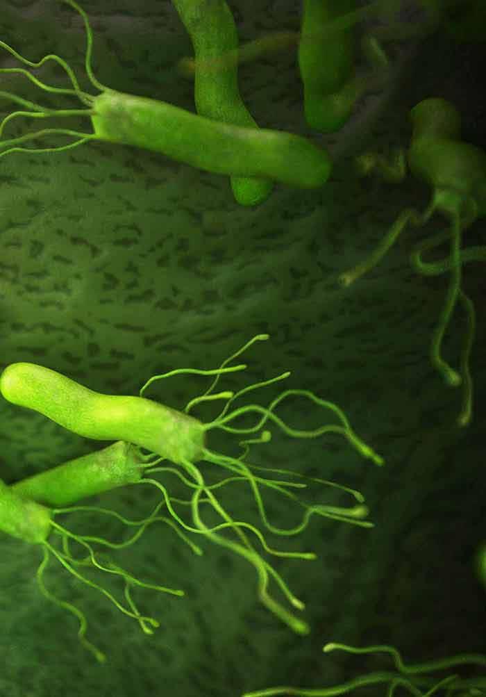 bacterie h pylori