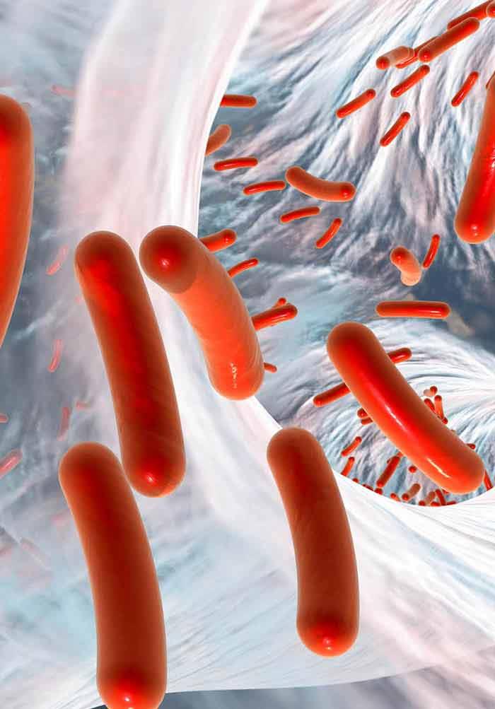 Escherichia coli and Food Safety | IntechOpen