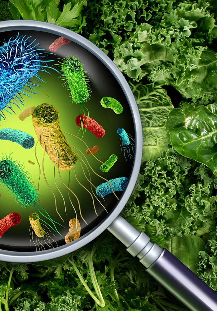 Listeria monocytogenes - A Global Food Safety and Public Health Concern